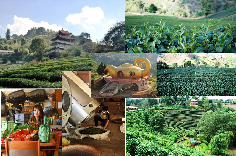 Tea cultivation in Northern Thailand, Collage
