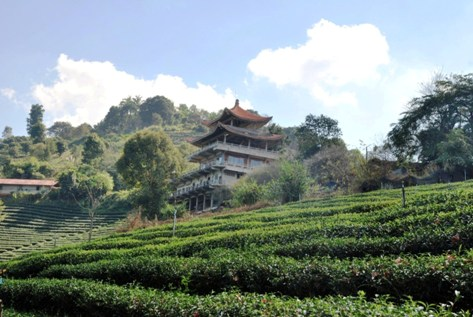 Doi Mae Salong tea garden with Chinese style building