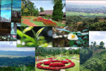 Doi Tung 2: The Tea Gardens of Doi Tung &#8211; On the Tracks of the Royal Development Project