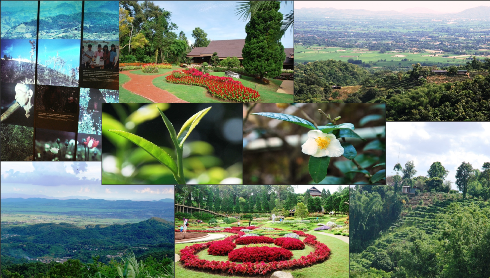 The tea gardens of Doi Tung - On the tracks of the Royal Development Project