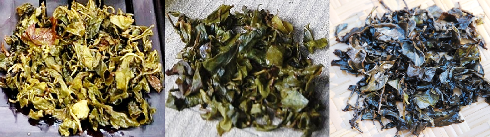 Jin Xuan Trinity: Summer Harvest Oolong Tea, Hoarfrost Tea & Black Pearls