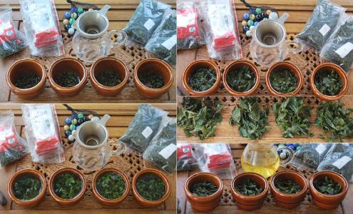 Sampling 4 grades of Tie Guan Yin from Anxi, province of Fujian, China