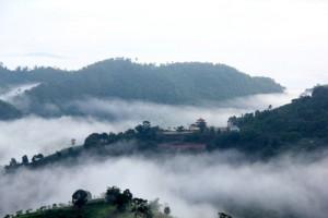 New Tea Mastery School set to open in Doi Mae Salong, North Thailand