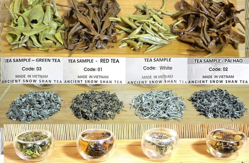 4 Ancient Thuyet Shan Teas from Vietnam - green tee, black tea, Snow Shan silver needle and Pai Hao Vietnam tea